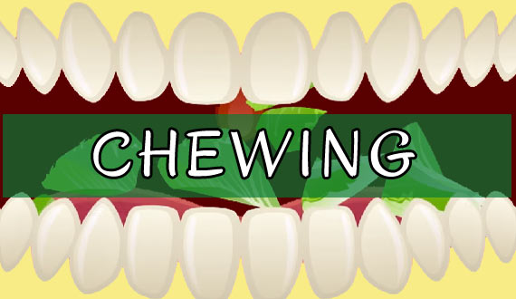 Chew Food to Improve digestion