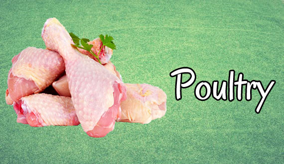 Chicken Enhances Immune Response