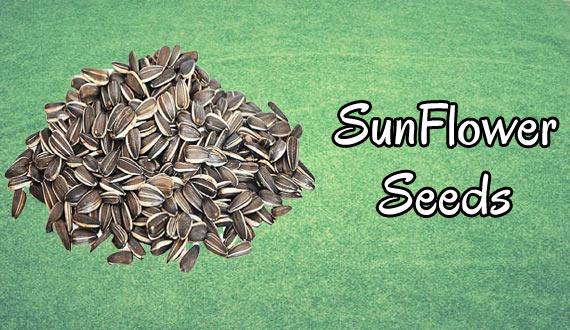Sunflower Seeds Boosts Immunity