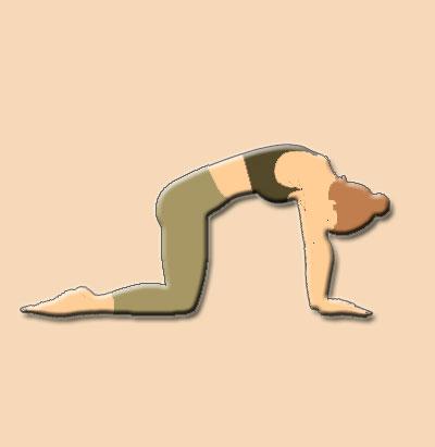 Marjariasana Cat Yoga Pose